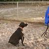 ms b at the dog park