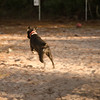 ms b at the dog park