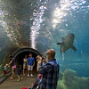 Walking through the shark tunnel