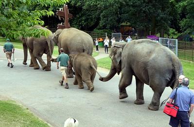 2016-08-11 Woburn Safari Park