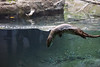 Otter_5194