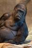 Mama Gorilla_5264