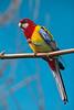 Parrot_5240
