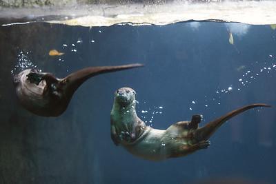 Zoo September 2012