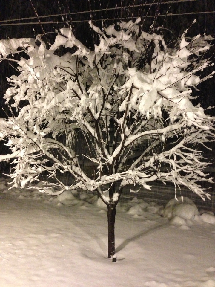 "Front yard ""flocked"" tree!"