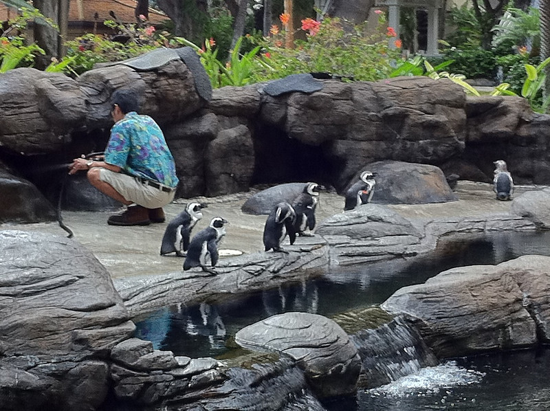 Penguins in tropical paradise!