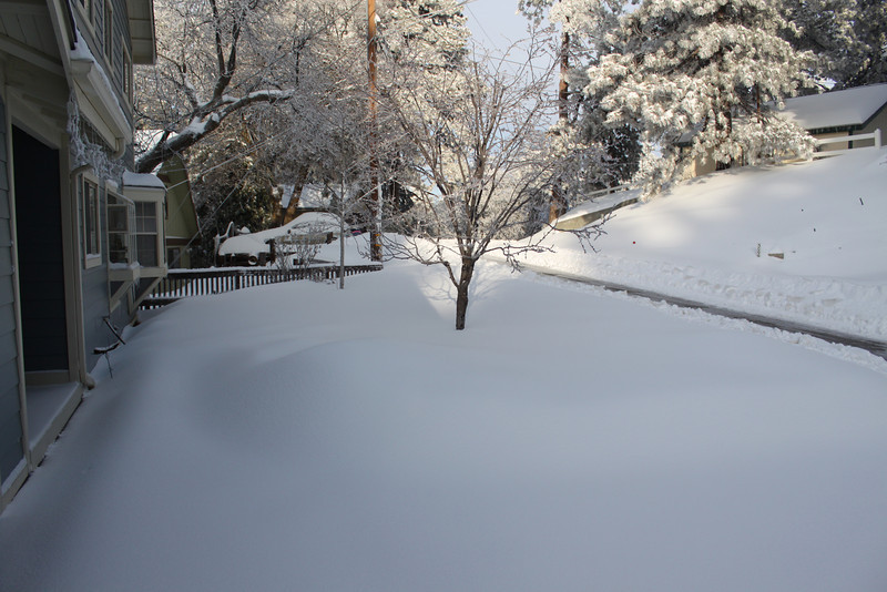 Our front yard after the storm.