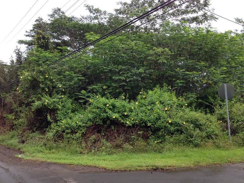 The corner of Maui Rd.  and Kehau Rd.