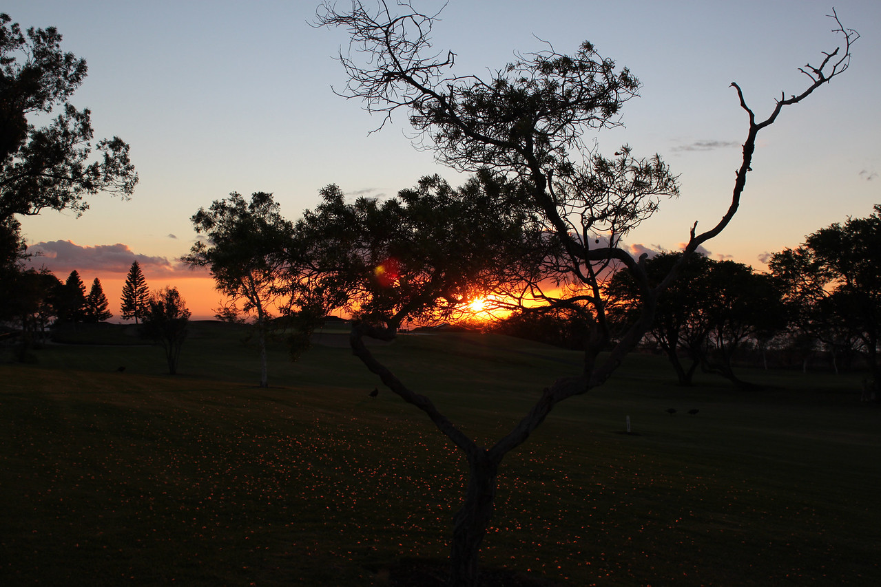 Sunset reflected on the leaves, 4th fairway at Waikoloa.