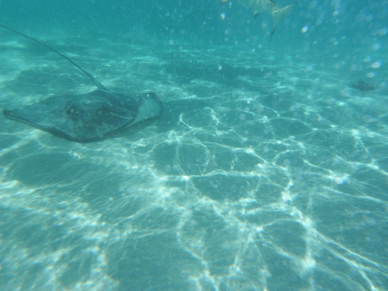 Stingrays swimming all around and through you.