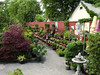 Small-growing species -- conifers, thymes, etc. -- have always been a very attractive offering at Keil's.