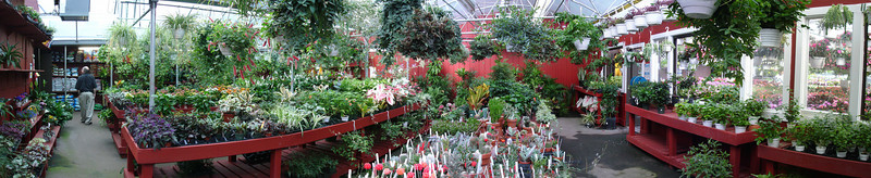 A panoramic view of the greenhouse interior.
