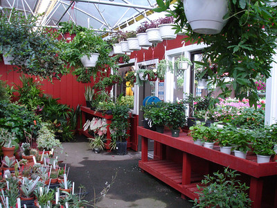 A corner of the greenhouse.