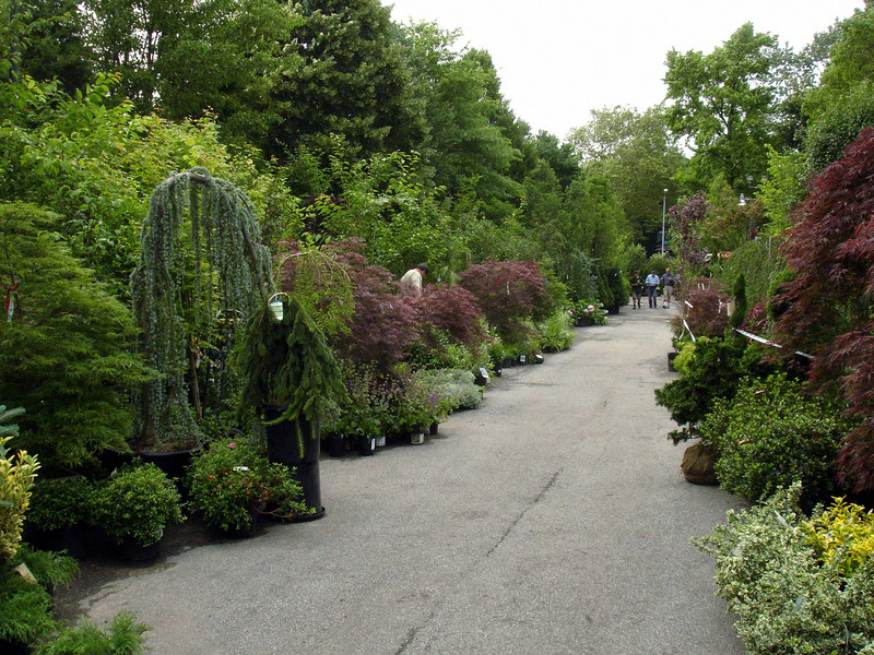 A view down the great way.  The Brooklyn Botanic Garden does not excel this presentation in beauty and order.