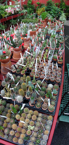 A vertical panoramic view of the cactus and succulent offering.