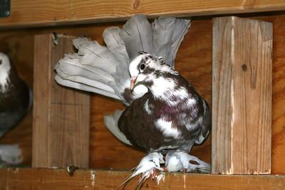Fancy Birds From Mike M.