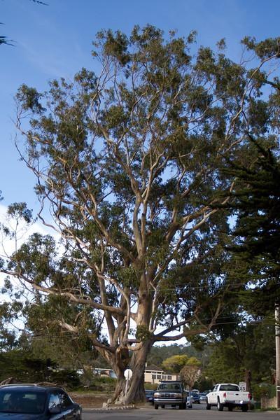 020511e-Monterey-Carmel-ibjc-3676