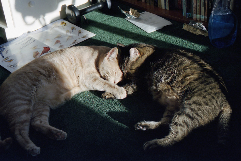 Oscar loves Gertie, and she tolerates him well most of the time.