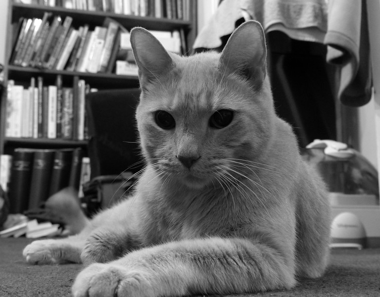 Oscar is a great subject for a black-and-white photograph...he looks so soft.  November 11, 2014