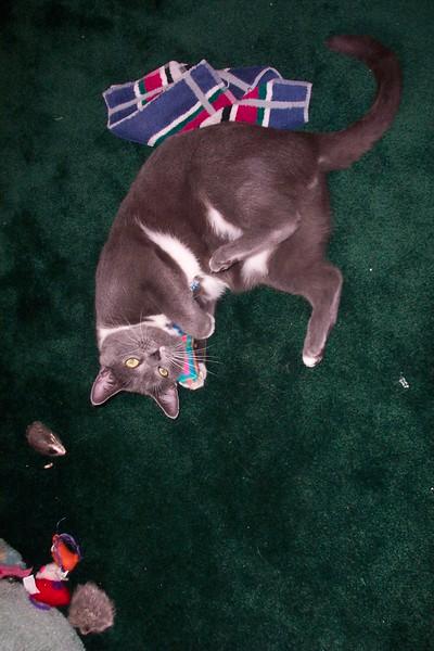 Simon does catnip, October 29, 2004