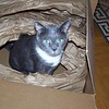 Simon has apparently won the battle against the stuffing in the box.  2009