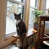 Simon, October 29, 2004