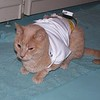 Oscar, not feeling good on his first day home from the hospital.  10/6/2006