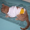 Oscar has feeding tube, a colorful bandage, and a t-shirt to try to keep him from messing with the tube.  10/6/2006