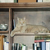 Oscar owns the bookshelf.