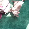 Simon maximizes the surface area covered by the sunbeam.  October 29, 2004