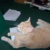 Oscar hangs out in the study while we work.  2009