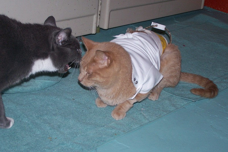 Oscar is just home from the kitty hospital and Simon reacts badly.  10/6/2006