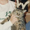 A scanned photo from the most ancient of days.  Gertie while she was still young kitty...