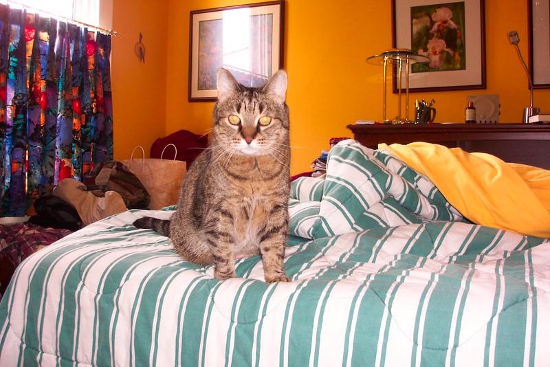 Gertie, October 29, 2004