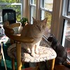 Oscar and Simon, October 29, 2004
