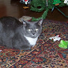 Simon guarding the ornaments he has pulled off the Christmas tree.  2009