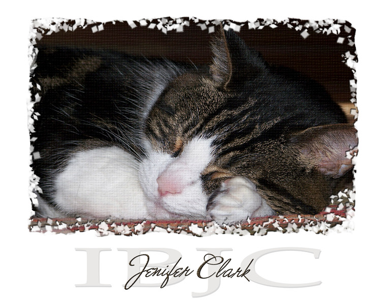 Bo has been with me/us since he was 6 weeks old. Now (12/2008) he is 16 years old. He has the best dispostion and loves to sleep on your lap if you are wearing jeans. Bo passed away 12/23/09 and is sadly missed.