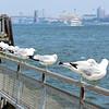 Gulls and Brooklyn Bridge.