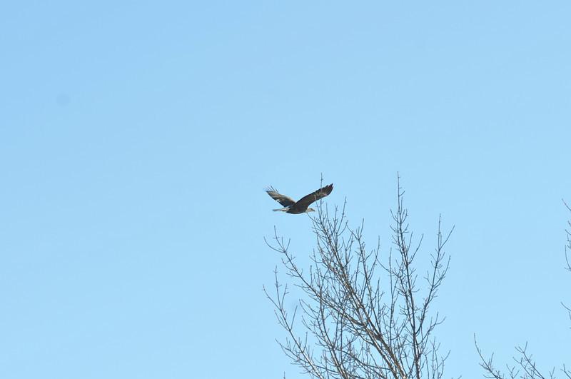 Bald Eagle Search 02-13-11 050