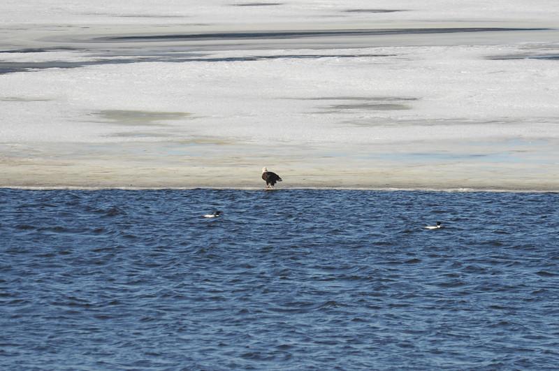 Bald Eagle Search 02-13-11 072