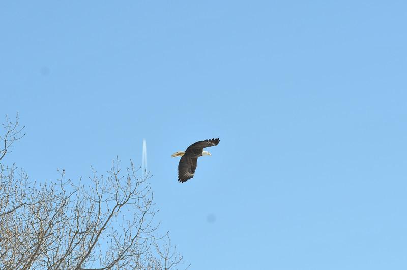 Bald Eagle Search 02-13-11 039