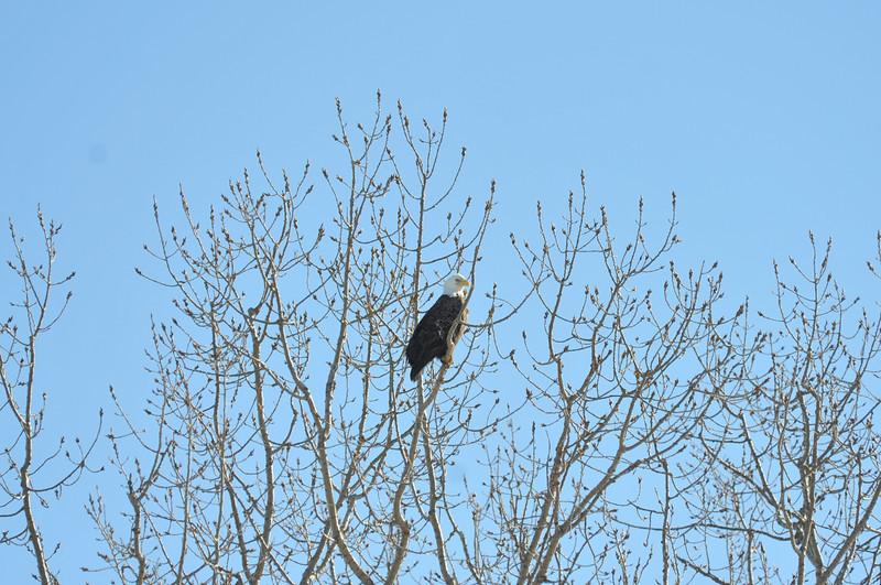 Bald Eagle Search 02-13-11 029