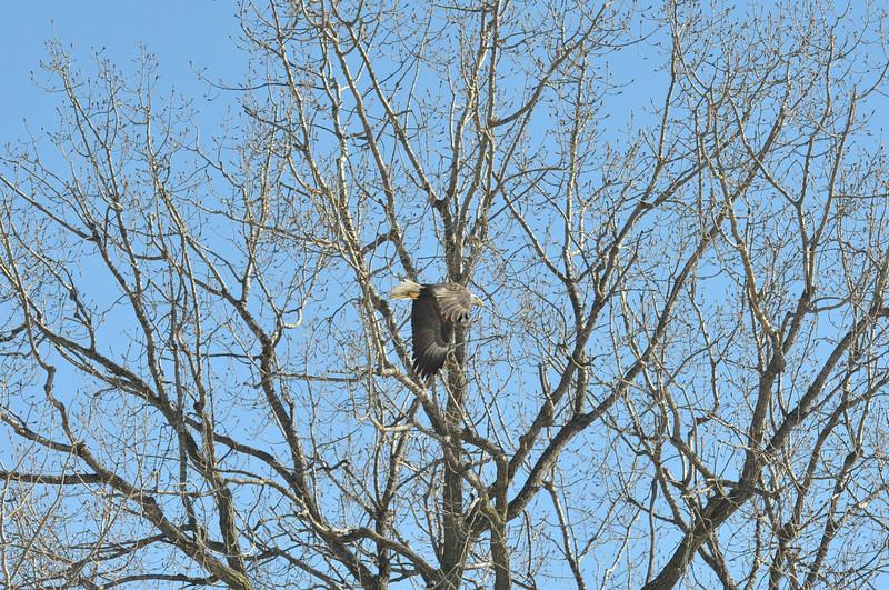 Bald Eagle Search 02-13-11 035