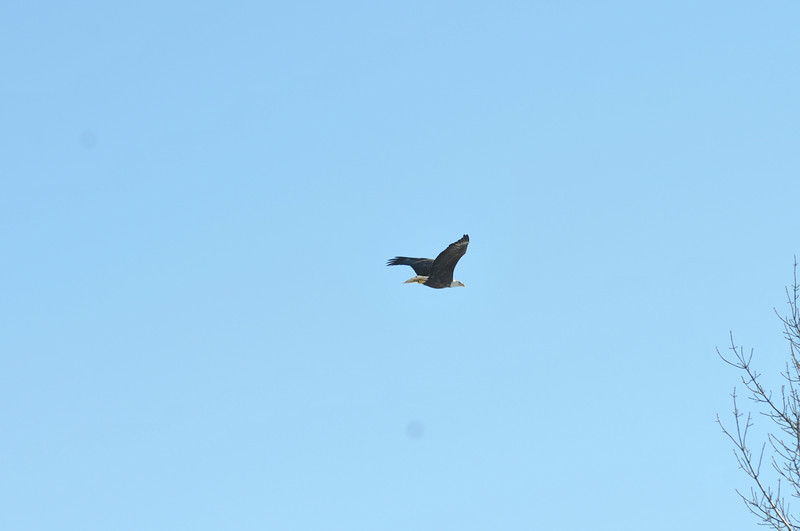 Bald Eagle Search 02-13-11 047