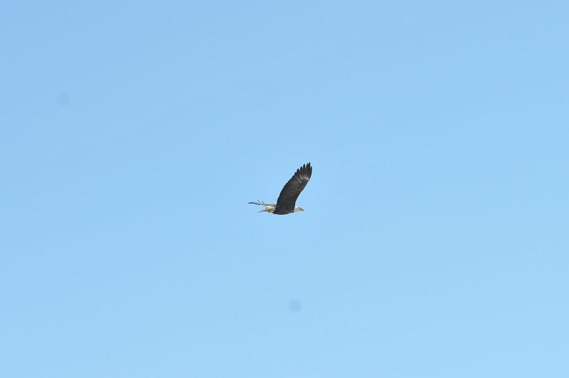 Bald Eagle Search 02-13-11 045