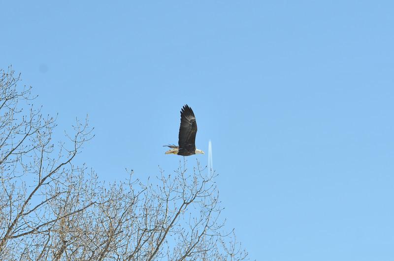 Bald Eagle Search 02-13-11 038