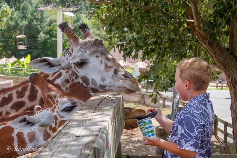 Henry - Feeding Giraffes at Zoo