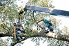 Guerin Tree Removal 07 01 2011-00013