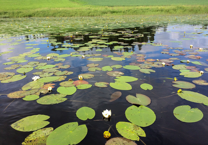 We shared the water with water lilies along the entire route.