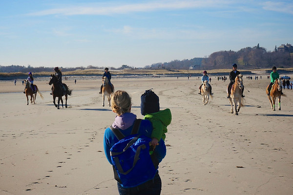 The best thing about Cranes Beach in the off season is the horses!